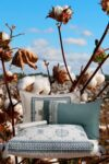 Luxury double duvet set in organic cotton satin, floating on a background of cotton plants
