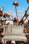 Luksuriøst økologisk sengetøj til dobbeltdyne svævende på en mark af bomuldsplanter. 4 pudebetræk, dynebetræk og lagen. Blød bomuldssatin med broderi